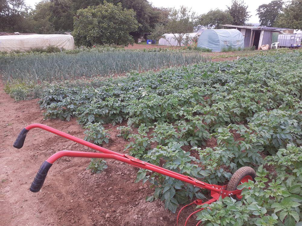 Légumes de mon jardin a l'ancienne 1 Flers (61)