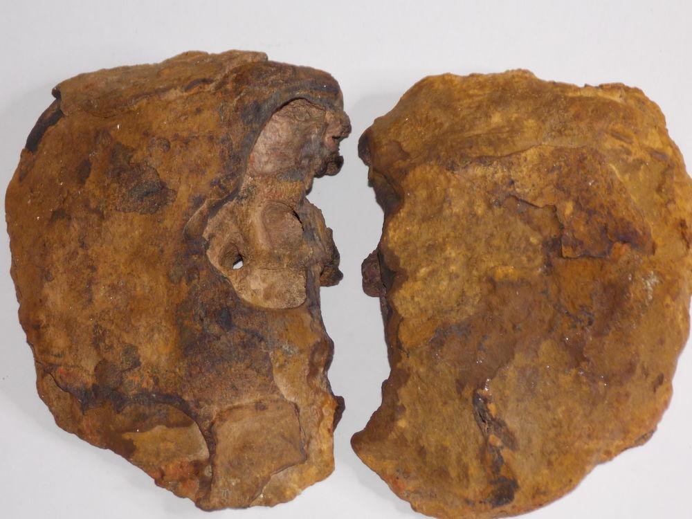 Limonite cloisonnée  (en 2 pièces) Origine inconnue 232gr   22 Moyenmoutier (88)