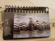 Livre photos/calendrier sans année d'animaux sauvages, neuf Livres et BD