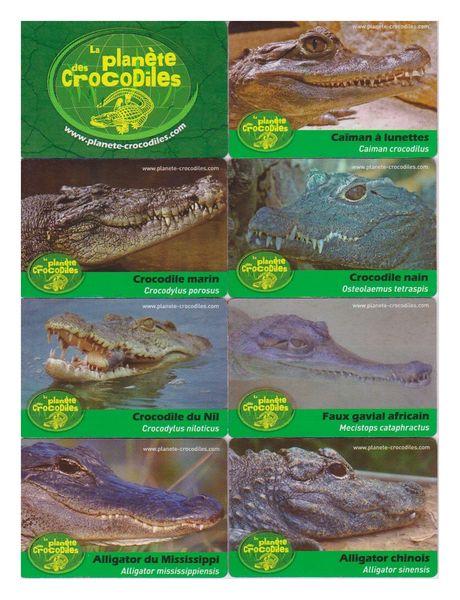 Magnets La Planète des Crocodiles. 12 Mont-Saint-Aignan (76)