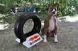 Mascotte Boxer des pneus Kléber