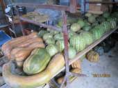 melons confiture 1 Cissac-Médoc (33)
