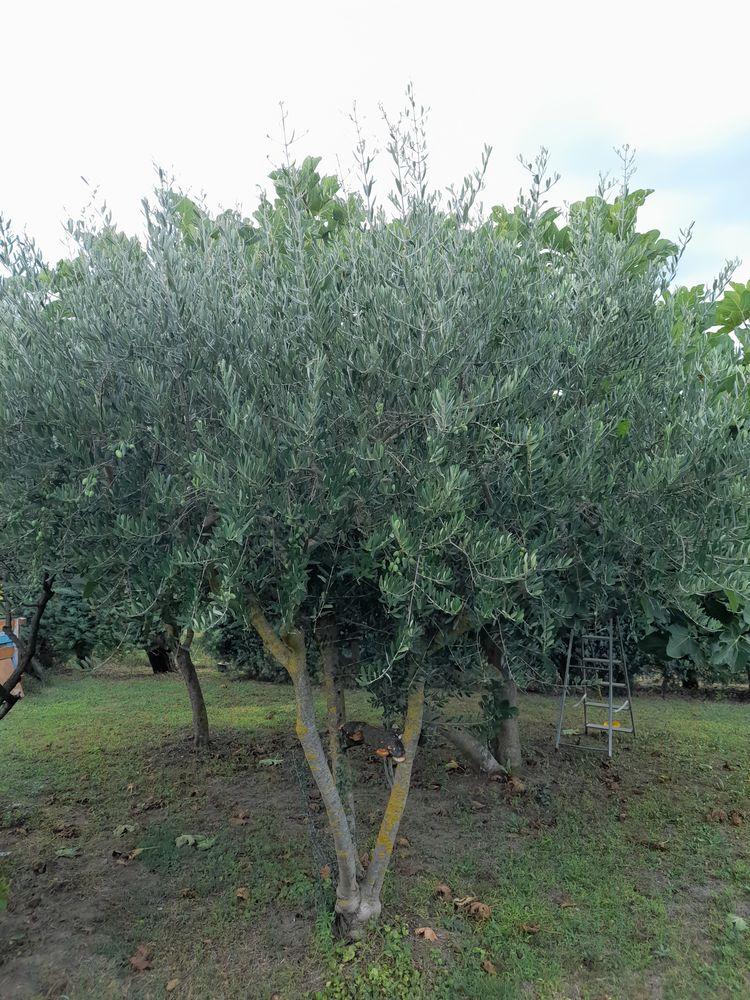 olivier 50 Tresques (30)