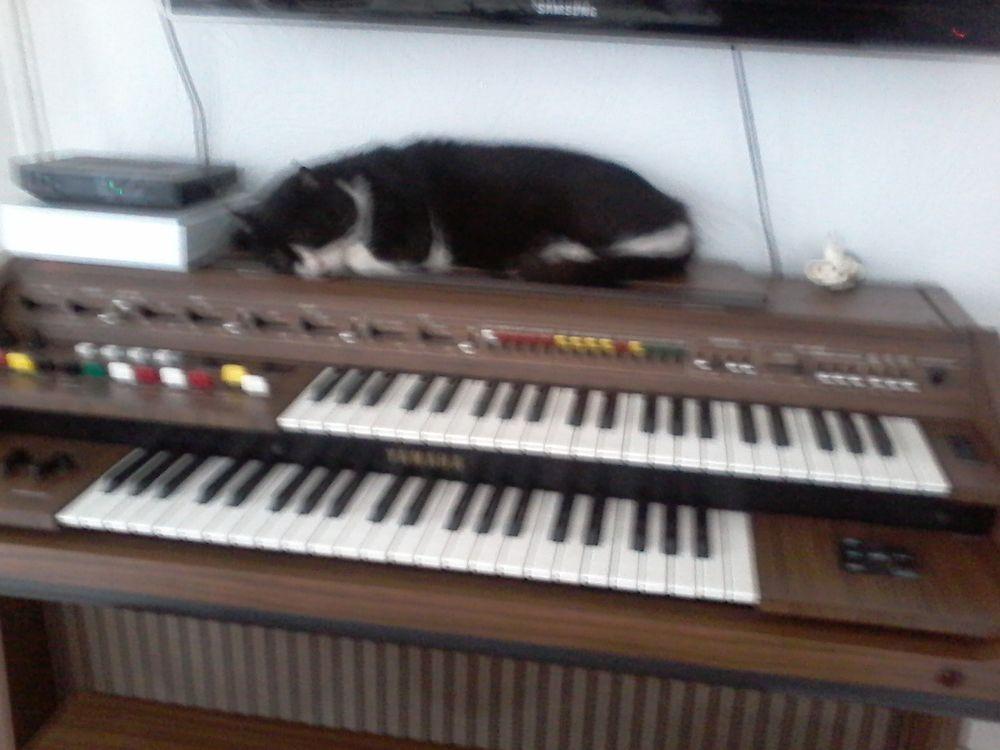 orgue électronique 0 Tourcoing (59)