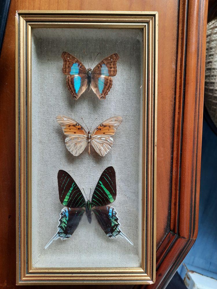 Papillons 120 Puybrun (46)