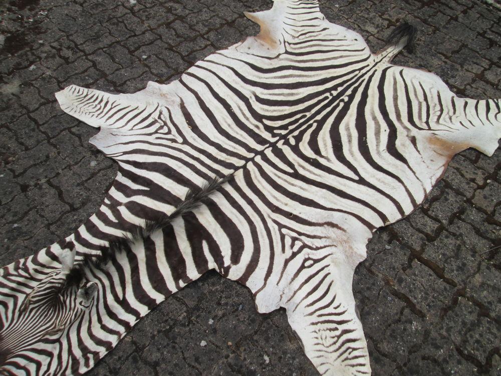 peau de zebre 1200 L'Union (31)