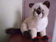 PELUCHE CHAT SIAMOIS GIPSY Oignies (62)