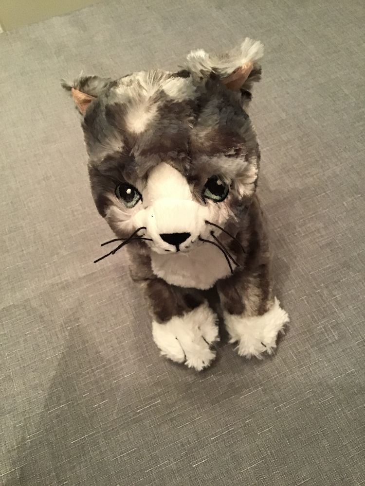 PELUCHE CHAT 5 Jonage (69)