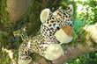 Peluche léopard Jeux / jouets