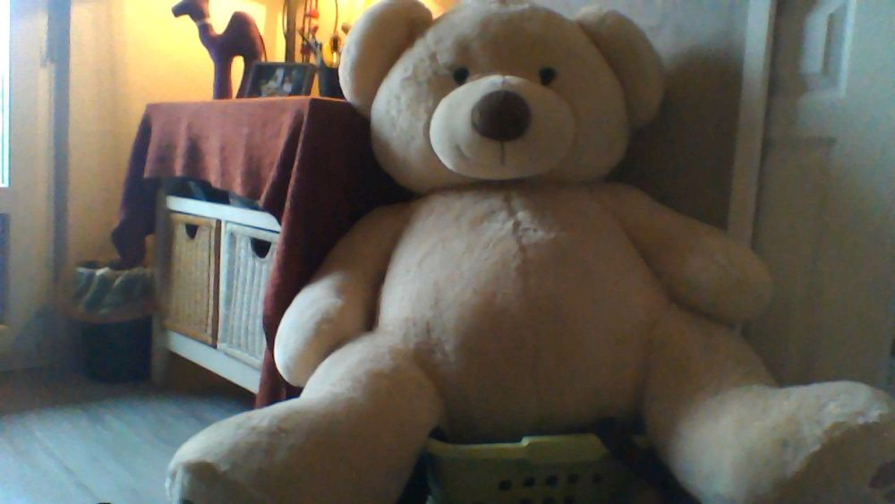 Peluche ours géant  50 Strasbourg (67)