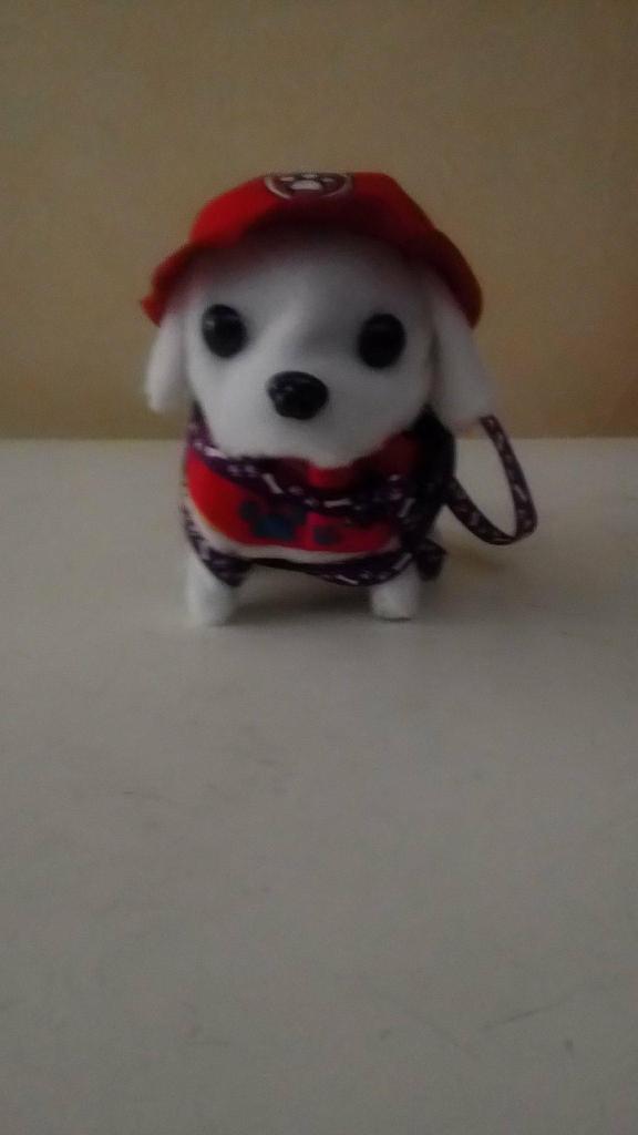 petit chien 5 Narbonne Plage (11)