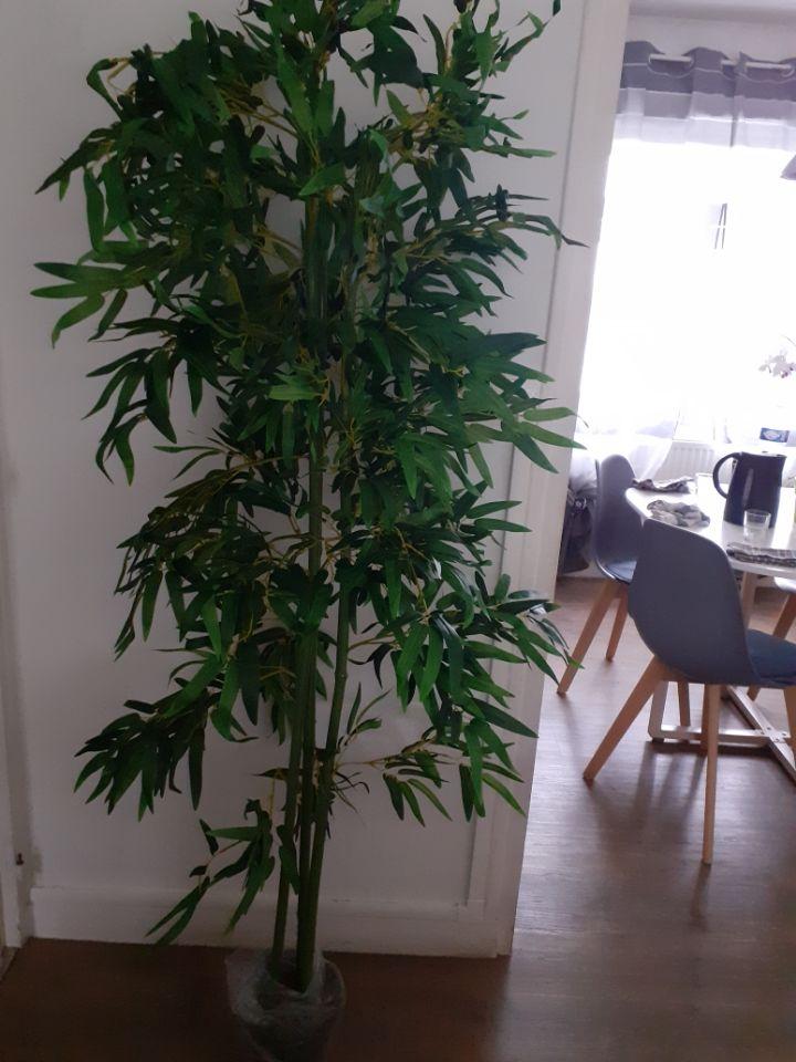 Plante artificielle bambou  0 Amiens (80)