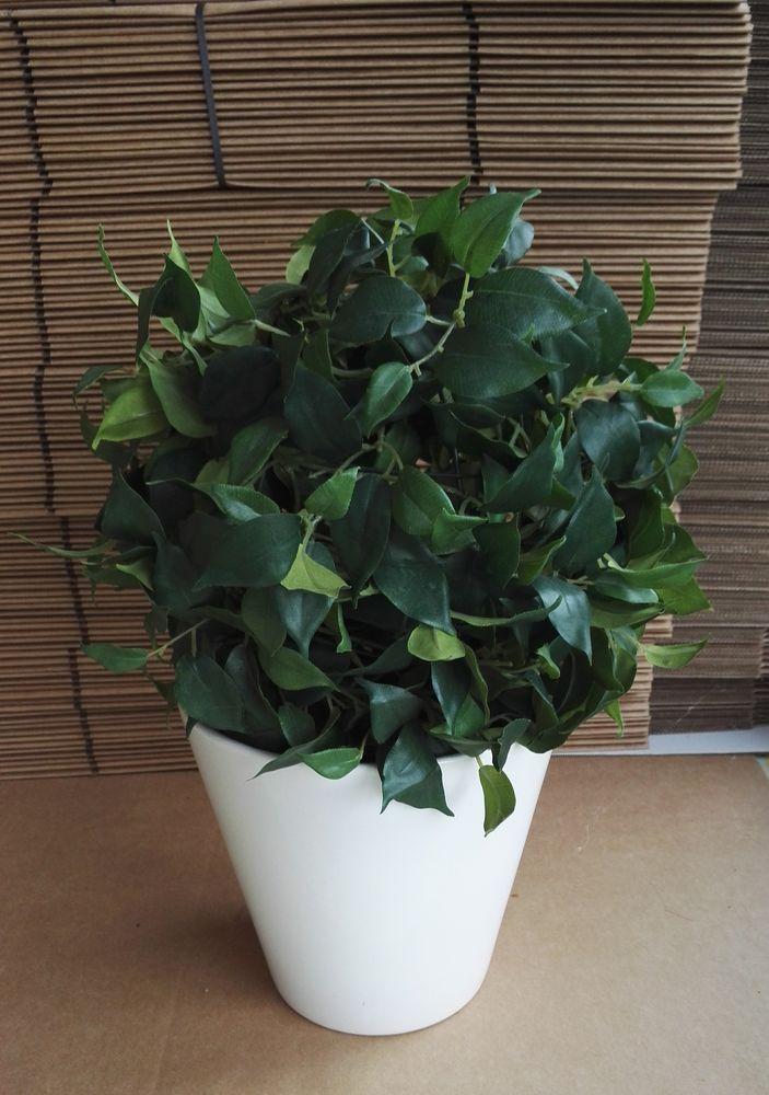 plantes occasion en haute savoie 74 annonces achat et vente de plantes paruvendu mondebarras. Black Bedroom Furniture Sets. Home Design Ideas