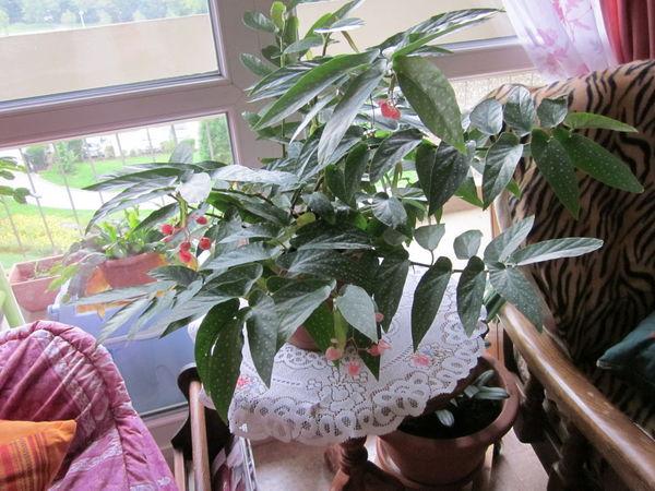 Jardins occasion le havre 76 annonces achat et vente de jardins paruvendu mondebarras - Plante goutte de sang porte malheur ...