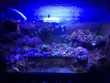 Plantes d'aquarium marin Jardin