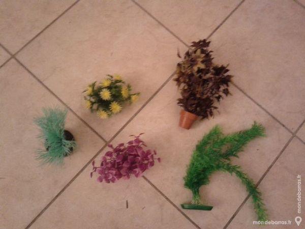 Plantes occasion marseille 13 annonces achat et vente for Plantes artificielles occasion