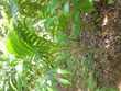 Plantes décoratives et dépolluantes  10 Ducos (97)