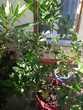 plantes de grand format 0 Riom (63)