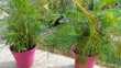 plantes interieur  0 Marmande (47)