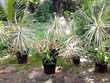 Plantes pour jardin familial 6 Ducos (97)
