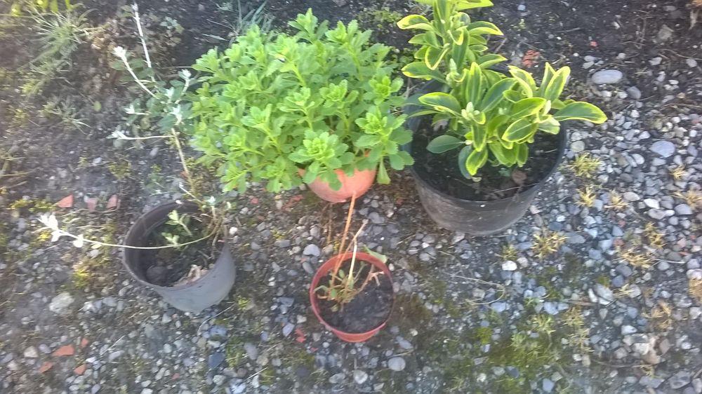 plantes racinees petit prix 2 Couladère (31)