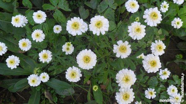 plantes vivaces 2 Saint-Germain-la-Blanche-Herbe (14)