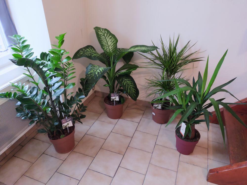 lot de 4 plantes 30 e 30 Vierzon (18)