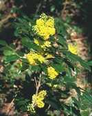 plein de belle plantes saines et  bio 1 Paris 12 (75)