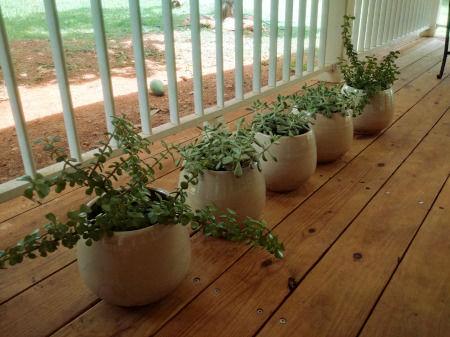 Lot de 5 Pots 20cm (France) et plantes succulentes 150 Saint-Martin (97)