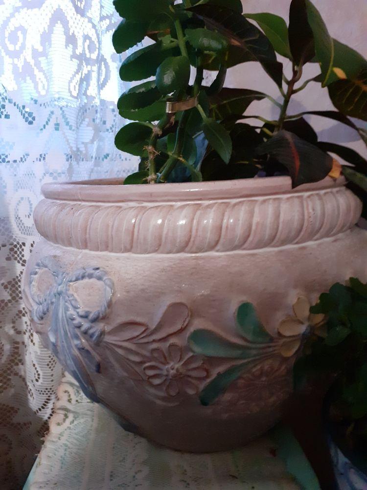 pot pour plante 70 Clermont-Ferrand (63)