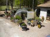 pres bonsai 5 Saint-Sauveur (33)