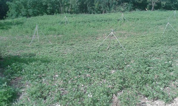Produits direct producteur : haricots, cornichons etc.... 4 Saint-Hilaire-du-Rosier (38)