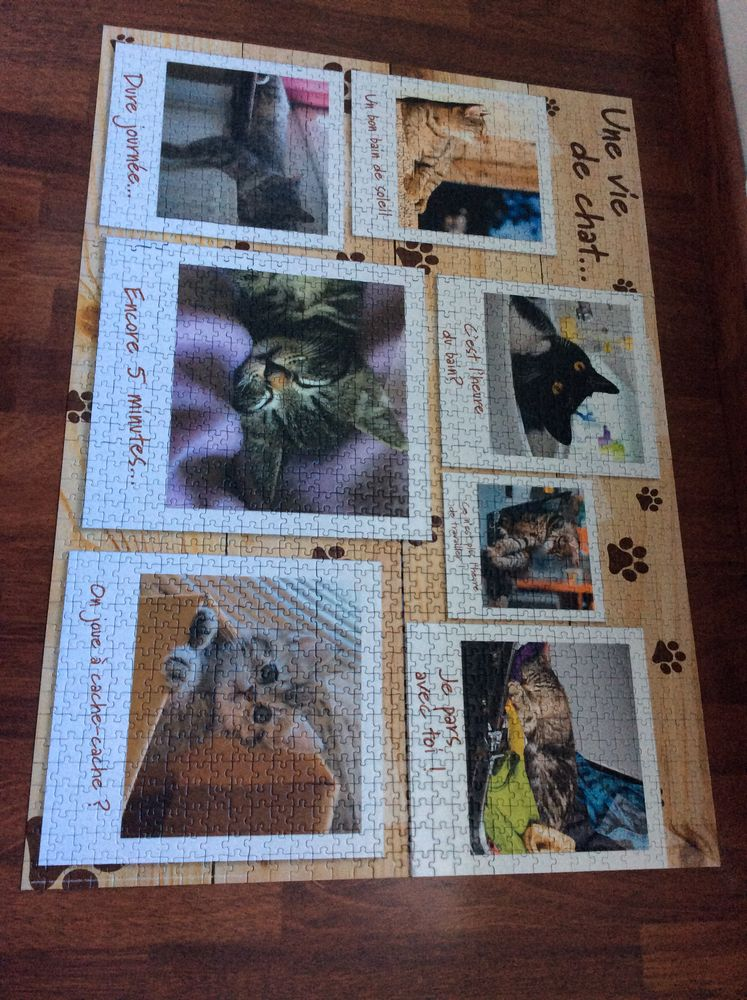puzzle chatons  15 Saucats (33)