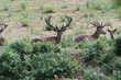 Séjour de chasse en occitanie Sports