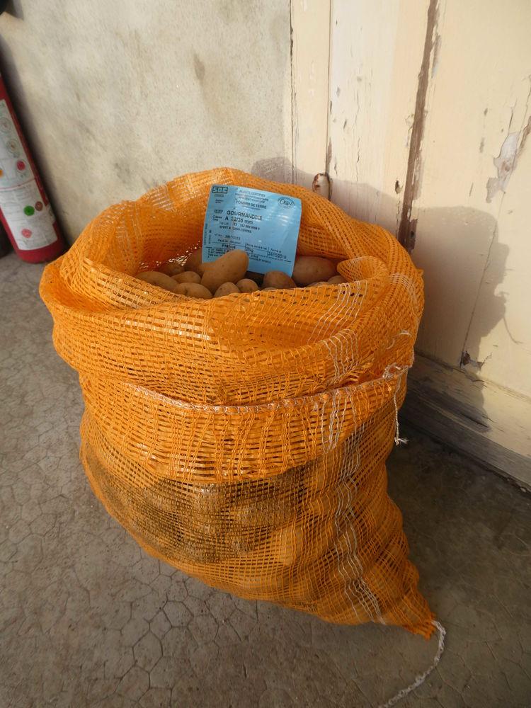 17 kg semence pomme de terre  Gourmandine  20 Serley (71)