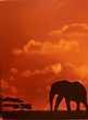 Tableaux cadres triptyque toiles Décoration