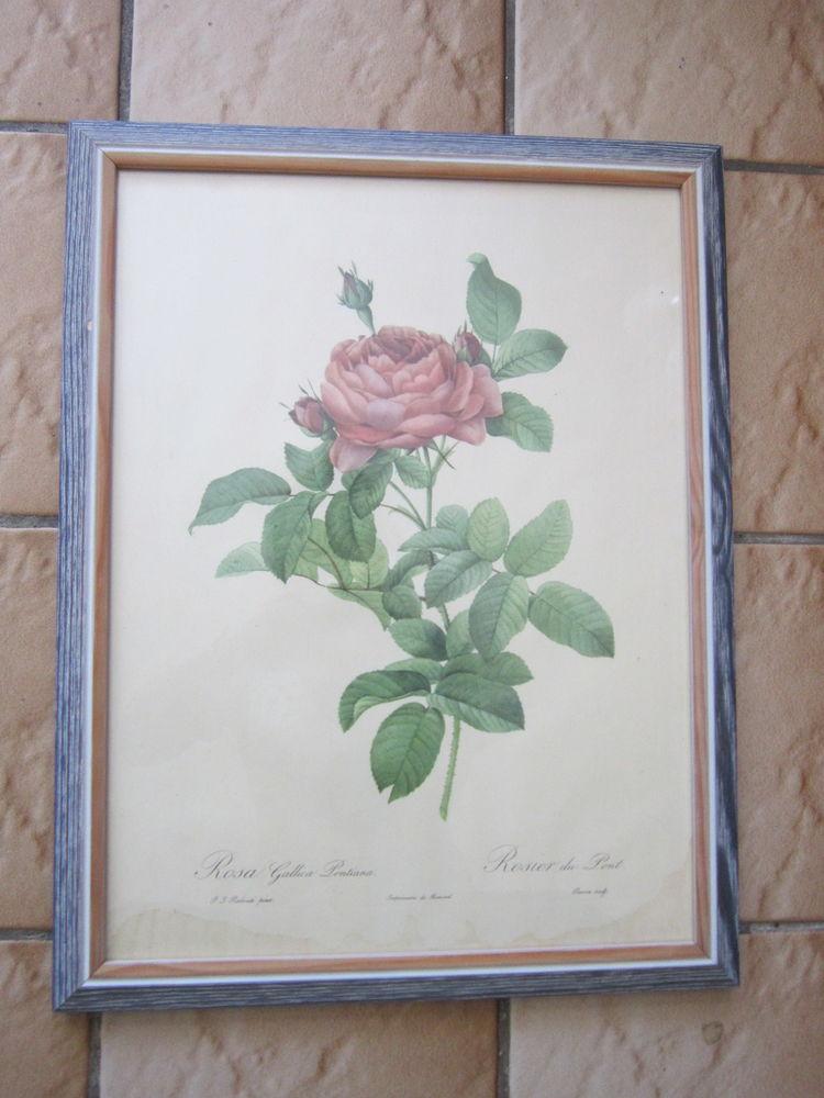 TABLEAUX ROSES DE REDOUTE 15 Gagny (93)