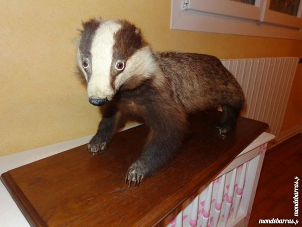 taxidermiste nievre