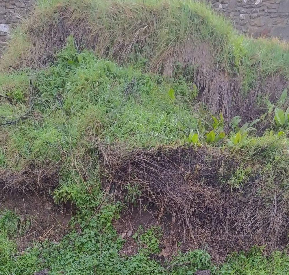Terre  végétale 10 Noailhac (12)