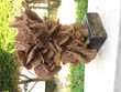 Trés belle rose des sables sur pied en bois 15 Rustrel (84)