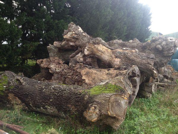 Achetez tronc d 39 arbre vend occasion annonce vente abbaretz 44 wb1515 - Maison en tronc d arbre ...