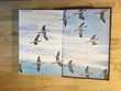 ?uvres romanesques de Maurice Genevoix reliure plein cuir Livres et BD