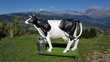 vache en resine et fibres de verre