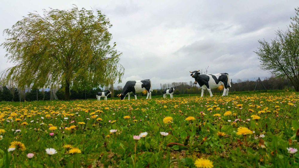 Jardins occasion dans le Vaucluse (84), annonces achat et vente de ...