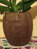 Vase marron - forme noix de coco - NEUF 20 Livry-Gargan (93)