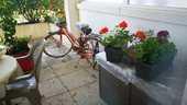 Vélo Peugeot rouge orange    180 La Rochelle (17)