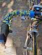 VELO SPECIAL ALLEGE Vélos