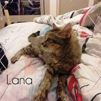 A adopter Lana qui a manqué d'affection