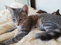 Oxane 9 mois à l'adoption 160
