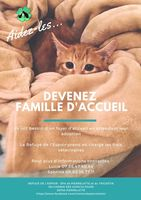 famille d'accueil chatons 0